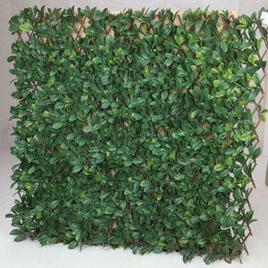 Witchhedge Extendable hedge laurel