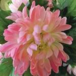flower 1 DSCF1497