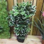 flower 10 DSCF1505