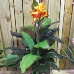 flower 12 DSCF1507