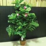 flower 13 DSCF1508