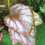 flower 4 DSCF1501