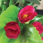 flower 6 DSCF1503