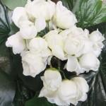 flower 7 DSCF1504