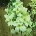 flower 8 DSCF1496