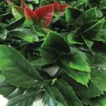 hedge tile autumn close up
