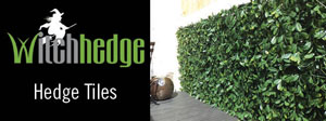 product header witchhedge 300px