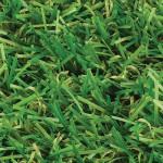 witchgrass-york-overhead-view